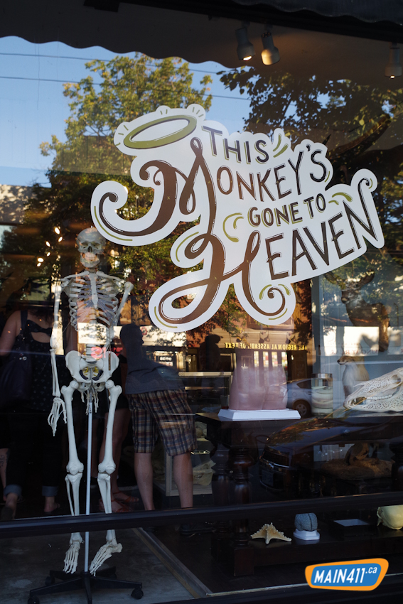 Read more about the article This Monkey's Gone to Heaven, A Lovely Collection of Curios